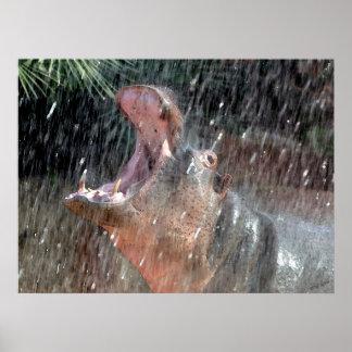 Welcome Shower Hippopotamus Portrait Poster