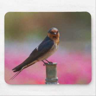 Welcome Swallow Mouse Pads