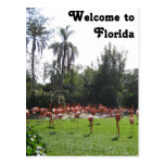 Welcome to Florida Flamingos Postcard