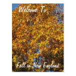 Welcome to New England Post Cards