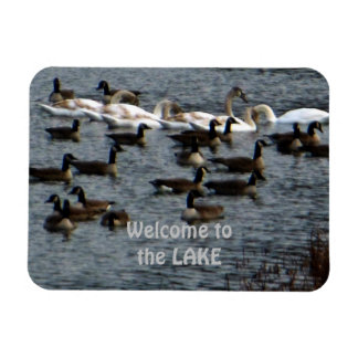 Welcome to the Lake Geese Swans Magnet