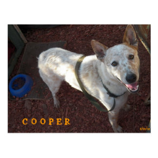 WELCOME TO YOUR NEW HOME COOPER POSTCARD