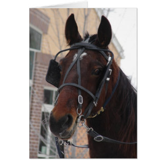Well Hello There, An Amish Horse Card