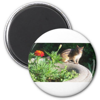 Well, Hello there, Chipmunk! 2 Inch Round Magnet