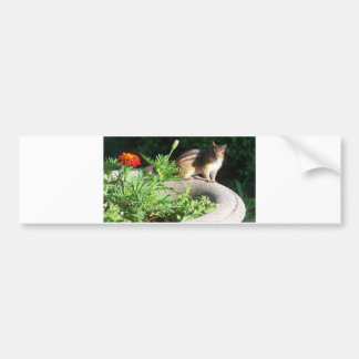 Well, Hello there, Chipmunk! Bumper Stickers