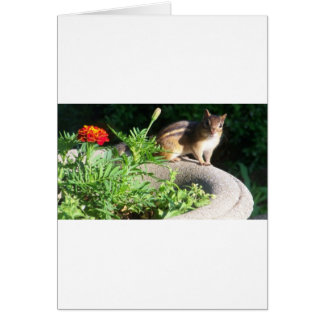 Well, Hello there, Chipmunk! Greeting Cards