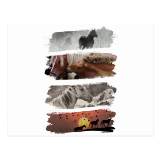 Wellcoda Animal Horse Family Wildlife Postcard