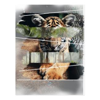 Wellcoda Tiger Lion Jungle Forest Animal Postcard