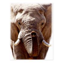 Wellcoda Wild Elephant Head Animal Face Postcard