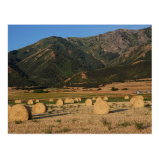 Wellsville Mountains and Hay Bales Postcard