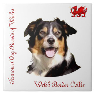 Welsh Border Collie Collector's Tile