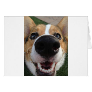 Welsh Corgi Dog Nose Collection Greeting Card