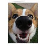 Welsh Corgi Dog Nose Collection Card