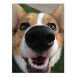 Welsh Corgi Dog Nose Collection Postcard