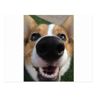 Welsh Corgi Dog Nose Collection Postcard