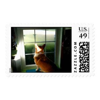 welsh corgi waiting postage