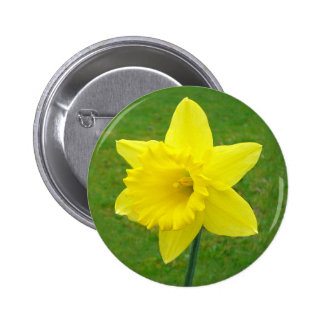 Welsh Daffodil 2 Inch Round Button
