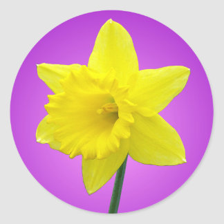 Welsh Daffodil - III Classic Round Sticker