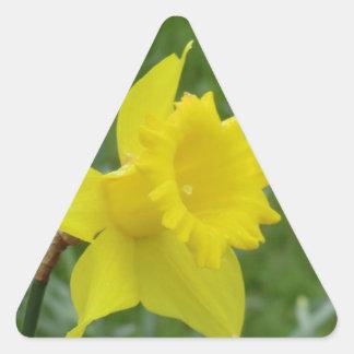 Welsh Daffodil in Bloom Triangle Sticker