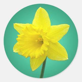 Welsh Daffodil - IV Classic Round Sticker