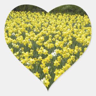 Welsh daffodils, Cymru am byth Heart Sticker