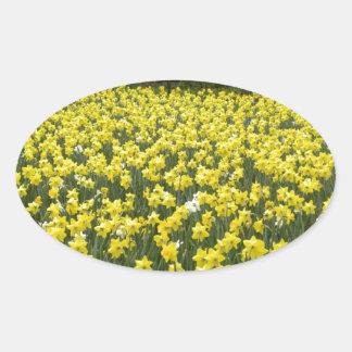 Welsh daffodils, Cymru am byth Oval Sticker