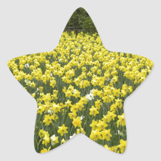 Welsh daffodils, Cymru am byth Star Sticker