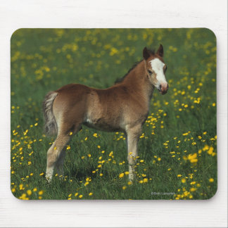 Welsh Foal Mouse Pad