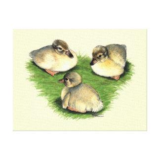 Welsh Harlequin Ducklings Canvas Print