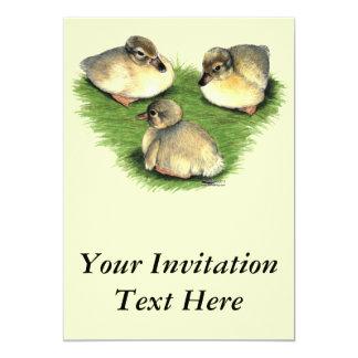 Welsh Harlequin Ducklings Card