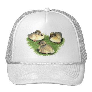 Welsh Harlequin Ducklings Hats