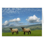 Welsh Lambs Greeting Card