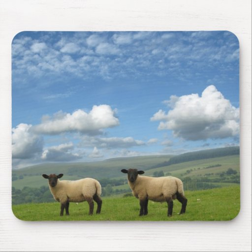 Welsh Lambs Mouse Pad