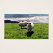 WELSH MOUNTAIN SHEEP BUSINESS CARD