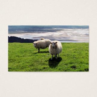WELSH MOUNTAIN SHEEP BUSINESS CARD
