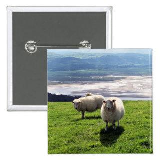 WELSH MOUNTAIN SHEEP BUTTON