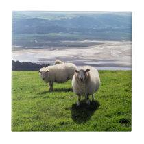 WELSH MOUNTAIN SHEEP CERAMIC TILE