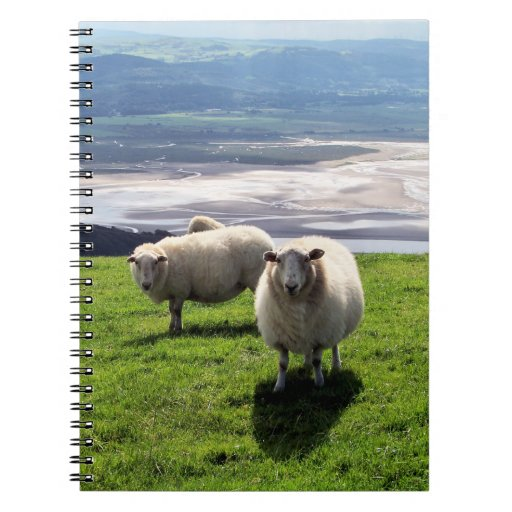 WELSH MOUNTAIN SHEEP SPIRAL NOTE BOOK