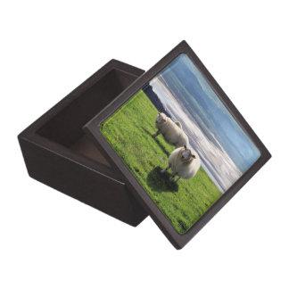 WELSH MOUNTAIN SHEEP PREMIUM TRINKET BOXES