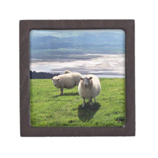 WELSH MOUNTAIN SHEEP PREMIUM JEWELRY BOX