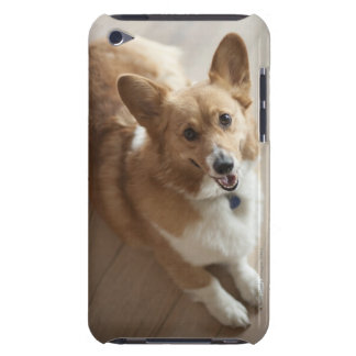 Welsh Pembroke corgi dog lying on wood floor Barely There iPod Case