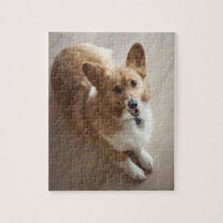 Welsh Pembroke corgi dog lying on wood floor. Jigsaw Puzzle