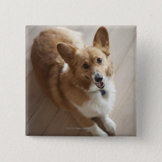 Welsh Pembroke corgi dog lying on wood floor. Pinback Button