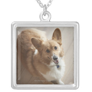Welsh Pembroke corgi dog lying on wood floor. Silver Plated Necklace