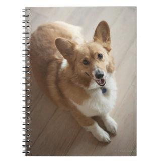 Welsh Pembroke corgi dog lying on wood floor. Spiral Notebook