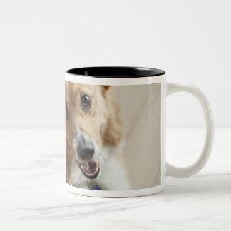 Welsh Pembroke corgi dog lying on wood floor. Two-Tone Coffee Mug