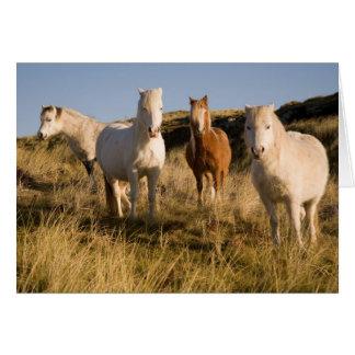 Welsh Ponies Card