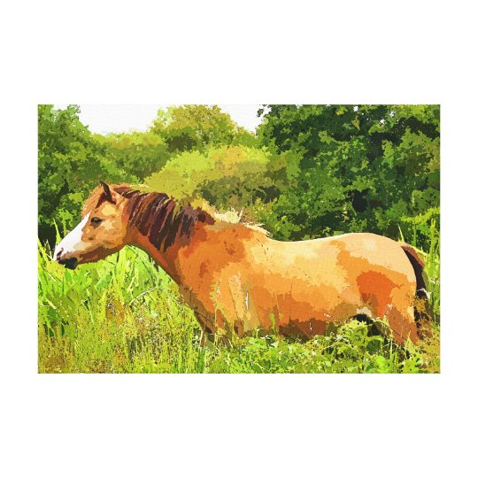 WELSH PONY CANVAS PRINT