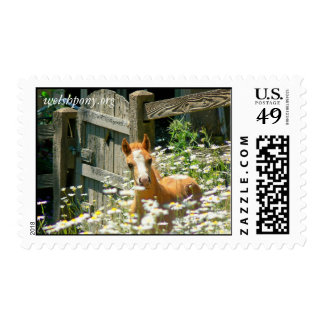 Welsh pony postage stamp