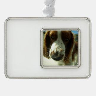 welsh springer spaniel close up.png ornament
